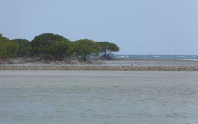 Das Geheimnis des toten Riffs