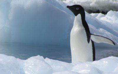 Arktis bdw-Leserreise 2007